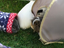 Neville and Biggles eat from tents while Roscoe turns his back