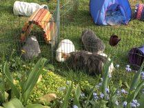 Four in the garden