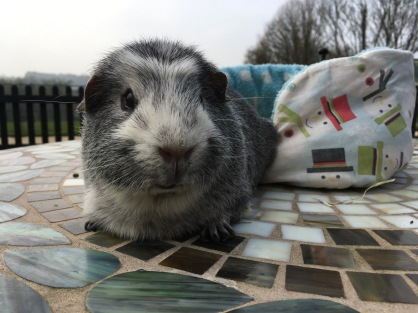 Bertie on the table