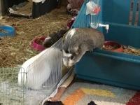 Bertie considers escape