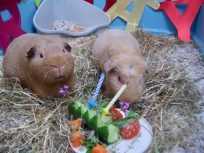 George Fred lavender cucumber birthday
