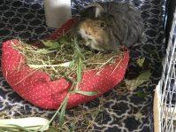 Neville eats lavender