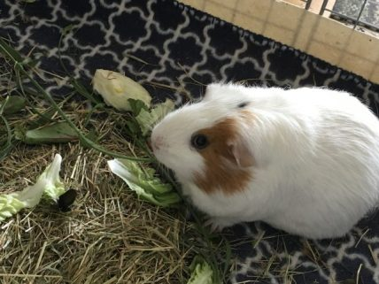 Roscoe eats lavender