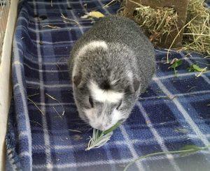 Bertie east lavender