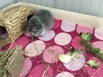Biggles eats lavender