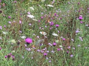 wildlfoer meadow with butterflies