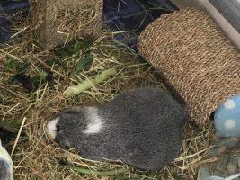 Bertie asleep