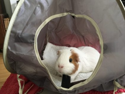 Roscoe in his new tent