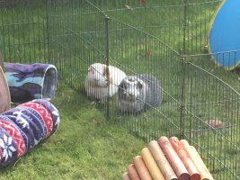 Bertie and Roscoe in Hampshire