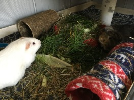 Roscoe and Neville get grass