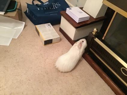 Roscoe explores