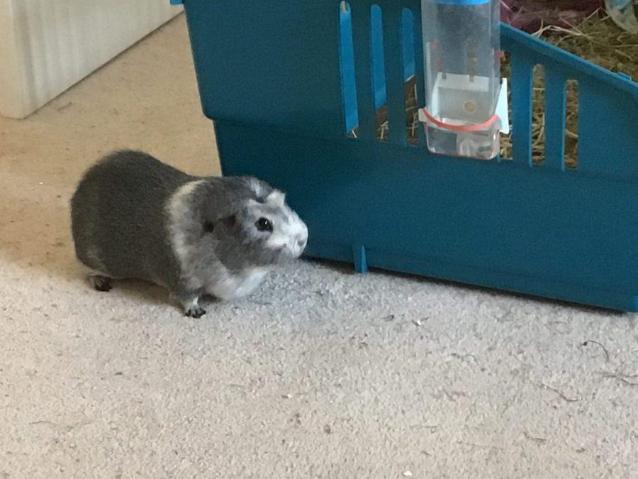 Bertie on the carpet