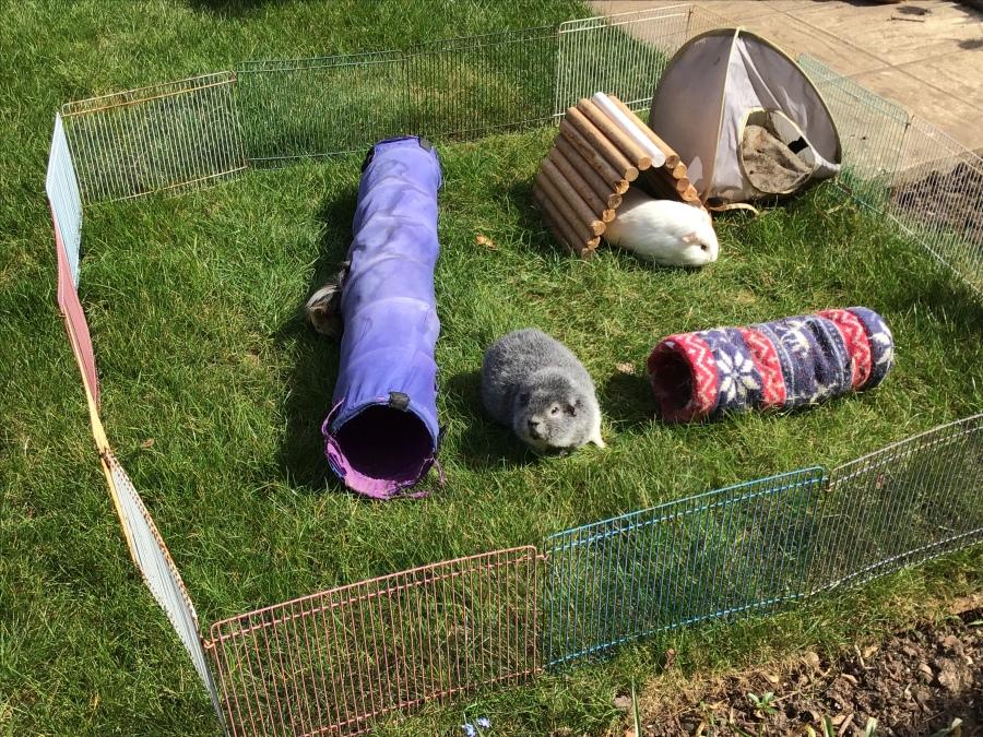 Biggles in the new garden