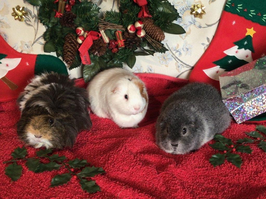 Neville, Roscoe and Biggles, Nov 2020