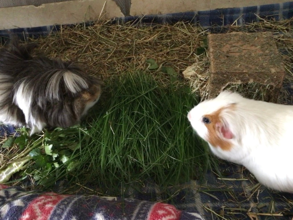 Neville and Roscoe have grass